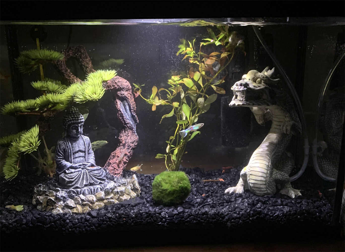 dragon_fishtank