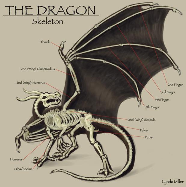 dragon_wing_skeleton