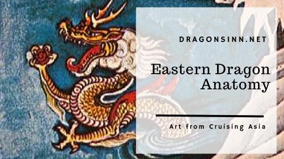 eastern_dragon_anatomy_header