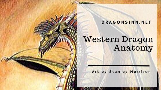 western_dragon_anatomy_header
