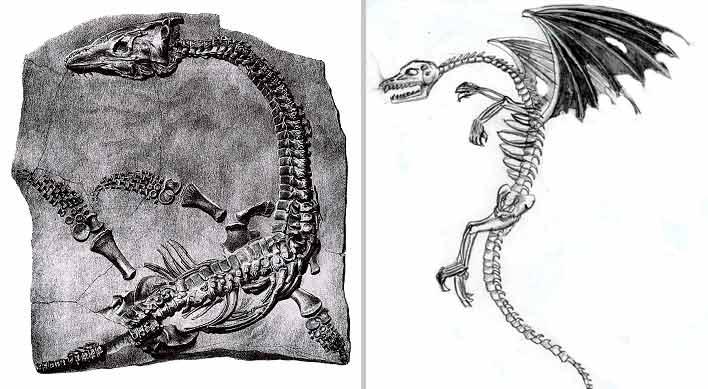 dragon_bones